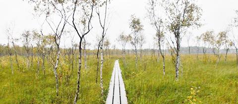 Největší mokřad jižního Švédska Store Mosse Nationalpark stojí za návštěvu!