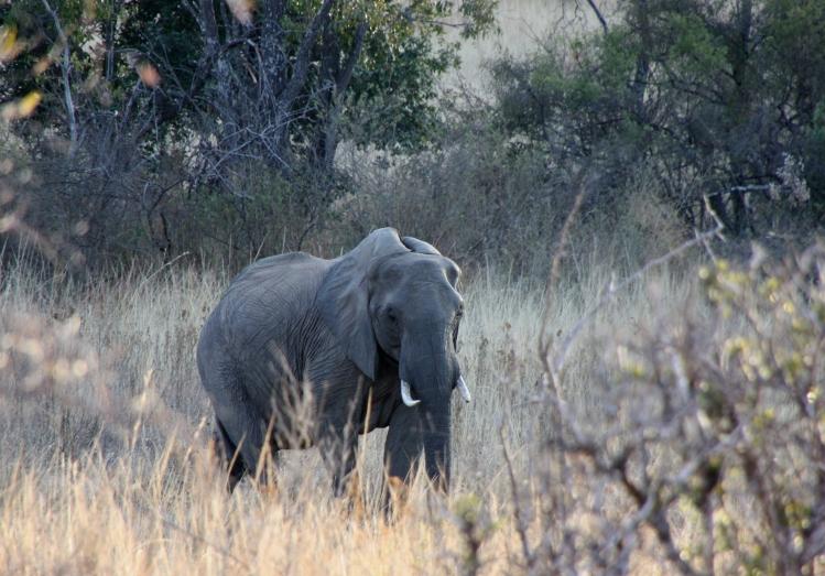 Slon může být drsným zabijákem