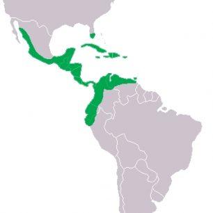 Mapa rozšíření krokodýla amerického (Crocodylus acutus)