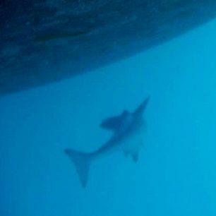 Pod lodí se nám usadil malý žralok