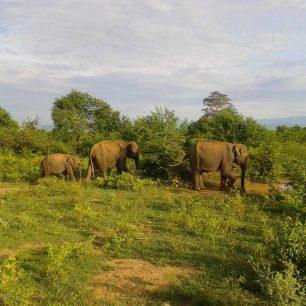 Narazit na slony je štěstí, Haluru Eco Park, Srí Lanka