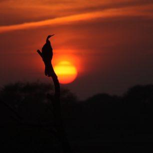 Pozorování ptáků v NP Kheoladeo, Indie