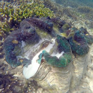 Giant clam sanctuary